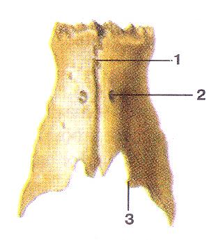 Кости черепа 35