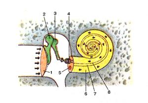 http://anatom.geiha.ru/data/393.jpg